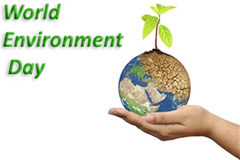 Save Our Earth free essay sample - New York Essays